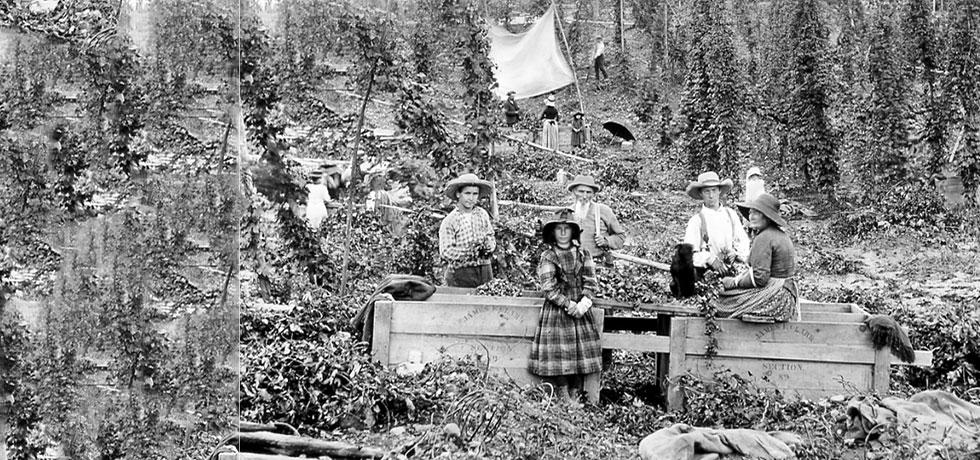 "Workers in a hops field near Cooperstown, NY.   The area was referred to as ""Hops City."""