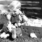 Children - Small Boy With Baby Chicks